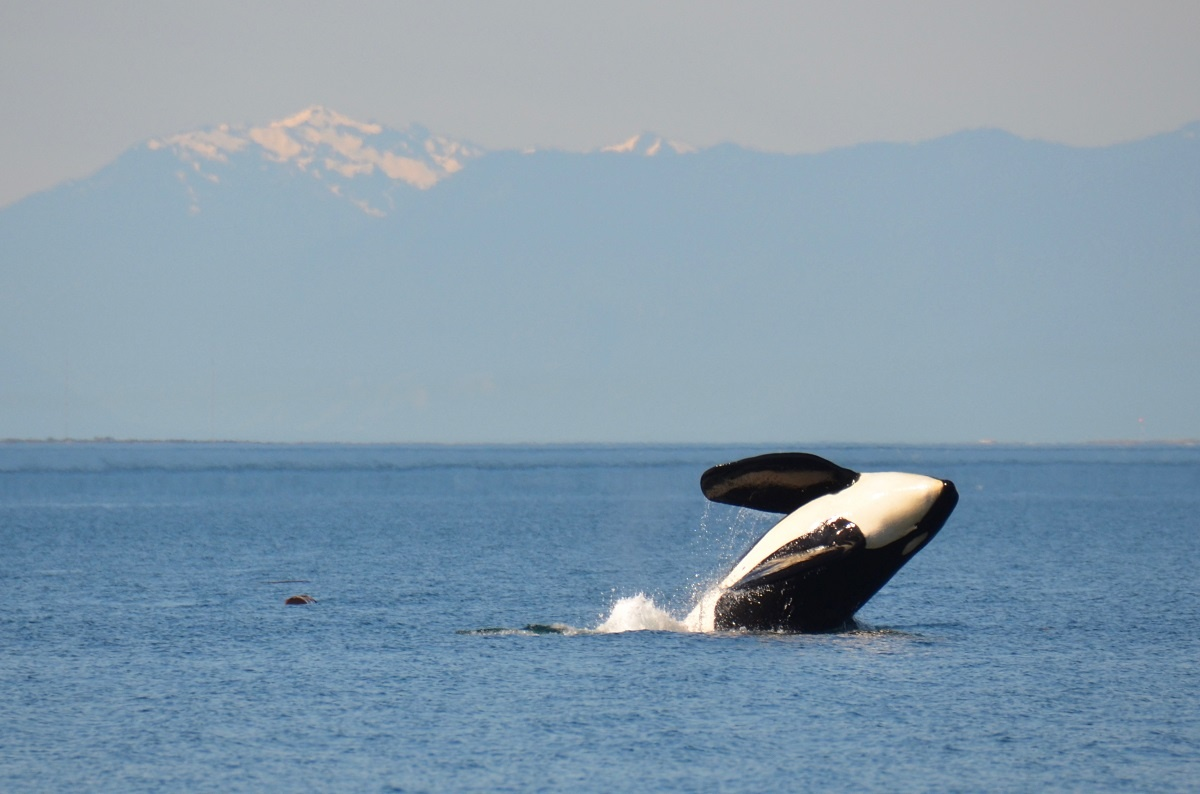 orcas-pipelines