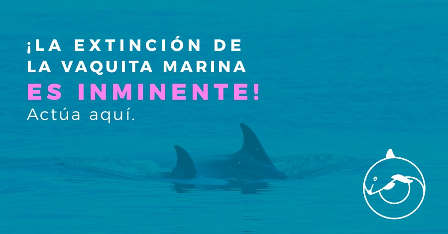 Resultado de imagen para vaquita marina greenpeace